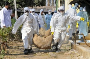 CINA-H7N9