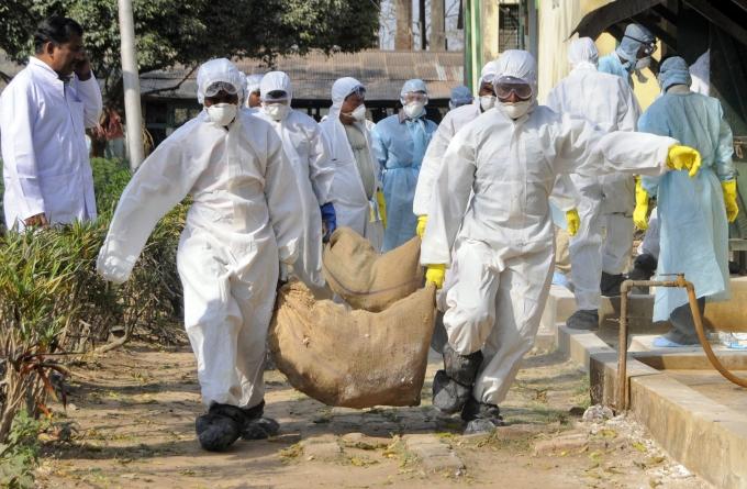 127 contagiati, 20 morti: adesso l'aviaria fa paura!