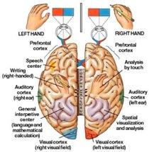 Specializzazione emisferica e mancinismo
