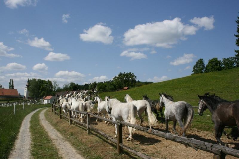 I cavalli vanno a scuola a Piber