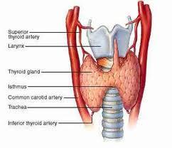 tiroide-bambini.1jpg
