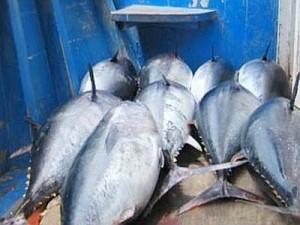 tonno-rosso-pesce