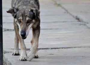Bolivian dog still waiting for his owner five years after accident