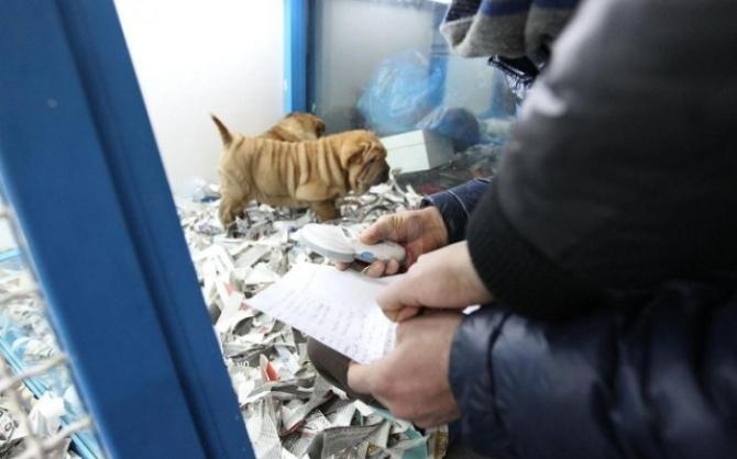 Scoperto traffico di cuccioli di cane dalla Romania, 10 arrestati