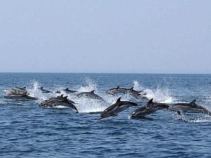 Petizione per restituire la libertà ai delfini dei parchi aquatici
