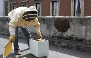 sciame-api-palazzo-marino