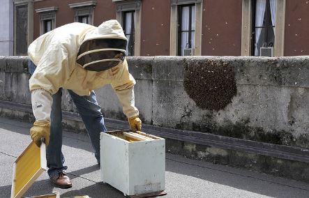 """Le api trovano casa a Palazzo Marino, ma il Sindaco li """"sfratta"""""""