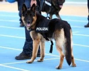 Napoli: cane poliziotto scopre hashish in un barattolo di crema per il corpo