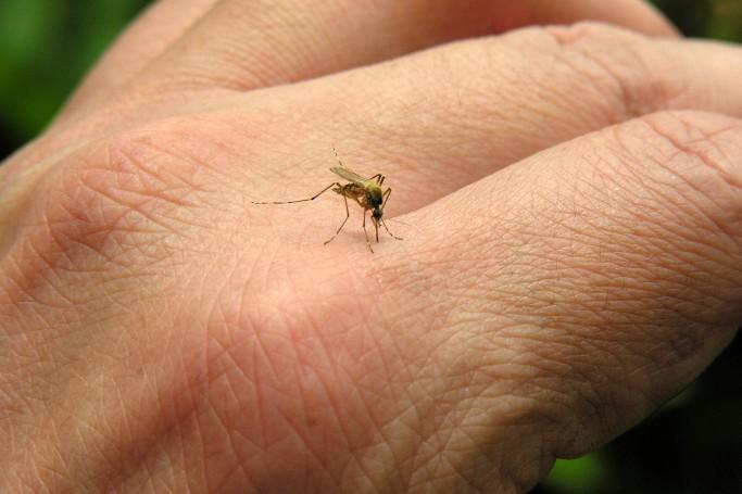 Punture d'insetti? La scoperta dell'acqua calda