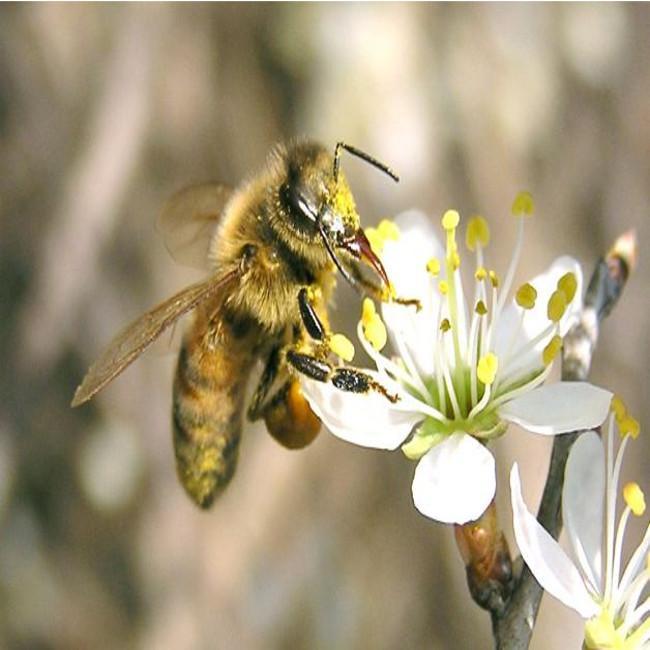 Petizione di Avaaz per salvare le api dallo sterminio dei pesticidi
