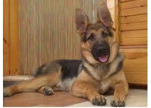 Le guardie zoofile salvano un cane dai maltrattamenti del padrone