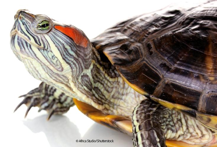 Traffico di specie animali esotiche: un business in crescita in Italia e nel mondo