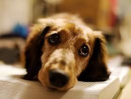 Maltrattamento agli animali  depenalizzato?  Una semplificazione  contraria all'etica di un Paese civile