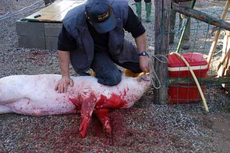 Rubano nei casolari e poi uccidono galline e conigli a bastonate