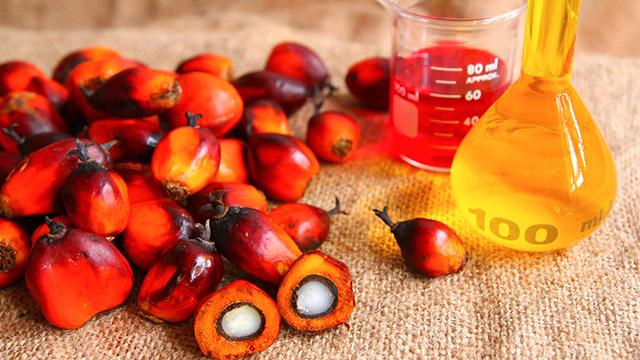 Olio di palma: non tutti concordano e la polemica infuria