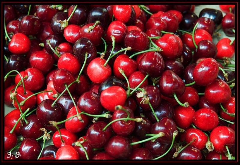 Chiaiano, festa della ciliegia. Premiati i vincitori
