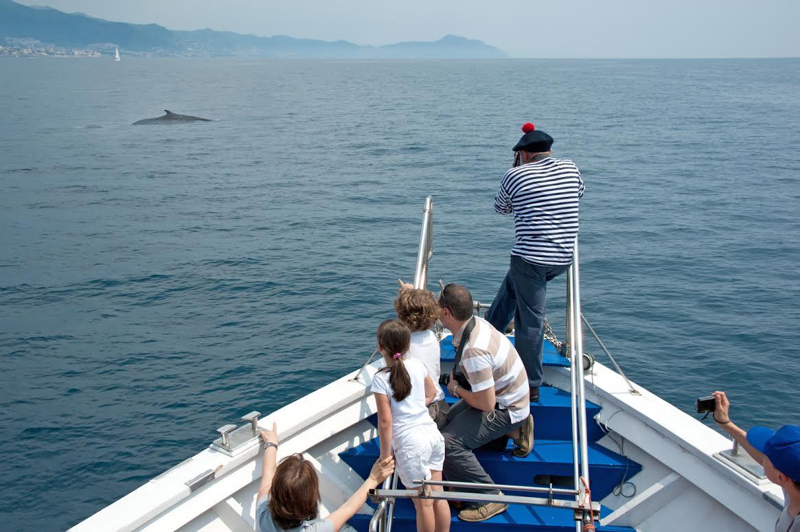 """""""CrocieraAcquario"""" a Genova, per conoscere meglio i delfini"""