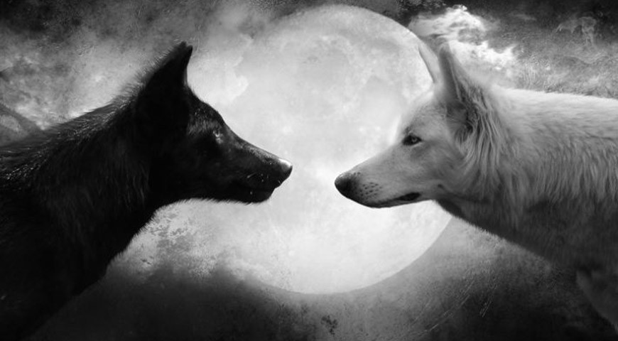 """Ottimismo vs pessimismo: quale """"lupo"""" nutri?"""