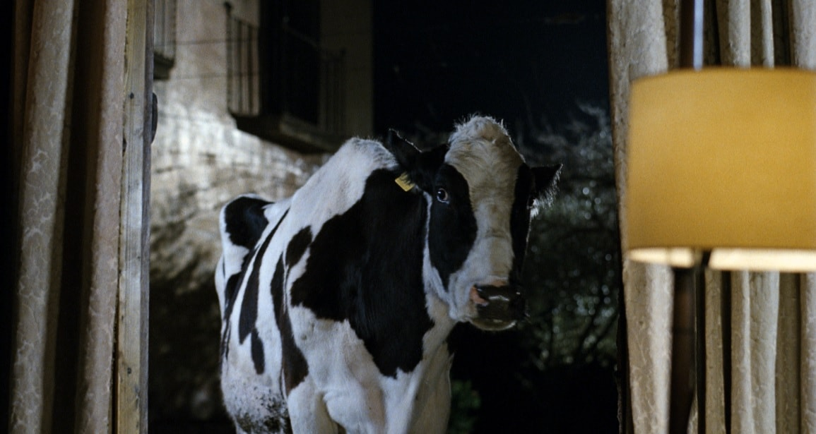 Anna Di Francisca racconta la sua mucca depressa
