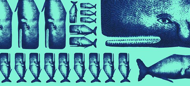 Moby Dick: l'umano, tragico, incomprensibile non sapere