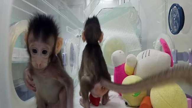 Clonazione di primati: sulla soglia della bio-politica