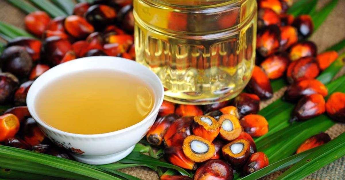 Perché l'olio di palma danneggia l'uomo