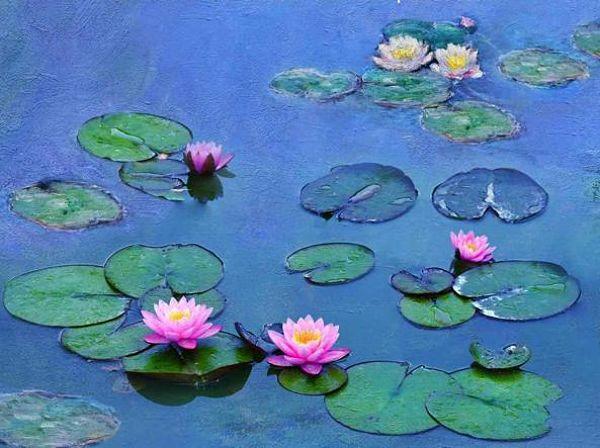 Le Ninfee di Monet, un incantesimo di acqua e luce | Un viaggio tra i luoghi del padre dell'Impressionismo