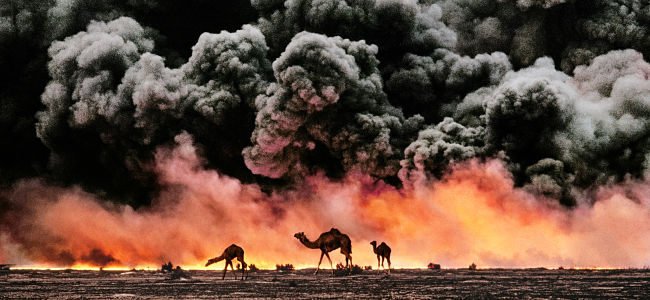 McCurry Animals la narrazione si fa fotografia al Mudec Photo