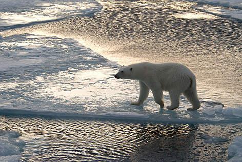 GLOBAL WARMING: Terra, un pianeta da salvare