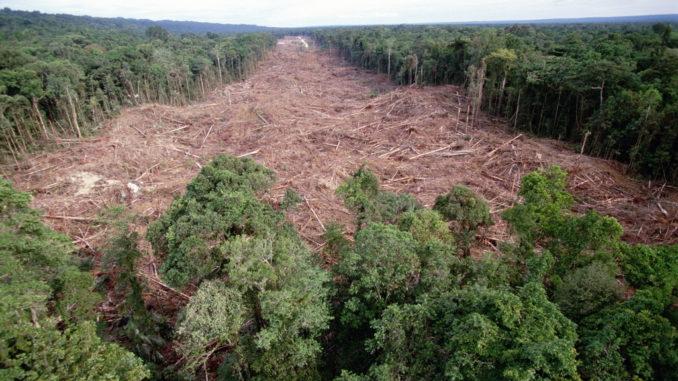 L'industria alimentare, prima colpevole della deforestazione