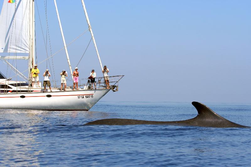 Conoscere balene e delfini con l'Istituto Tethys