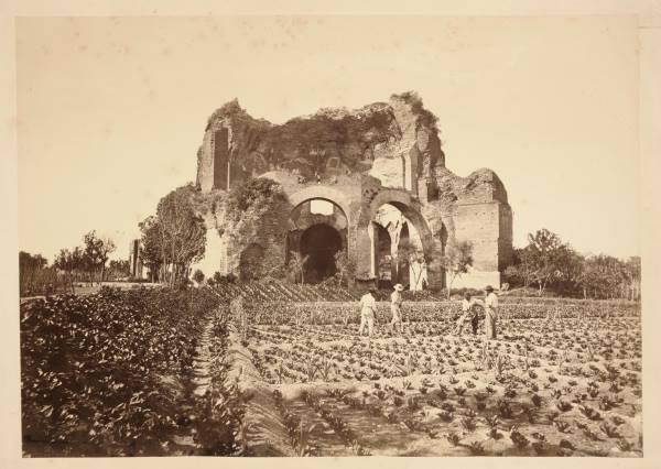 Tempio Minerva Medica coltivazioni